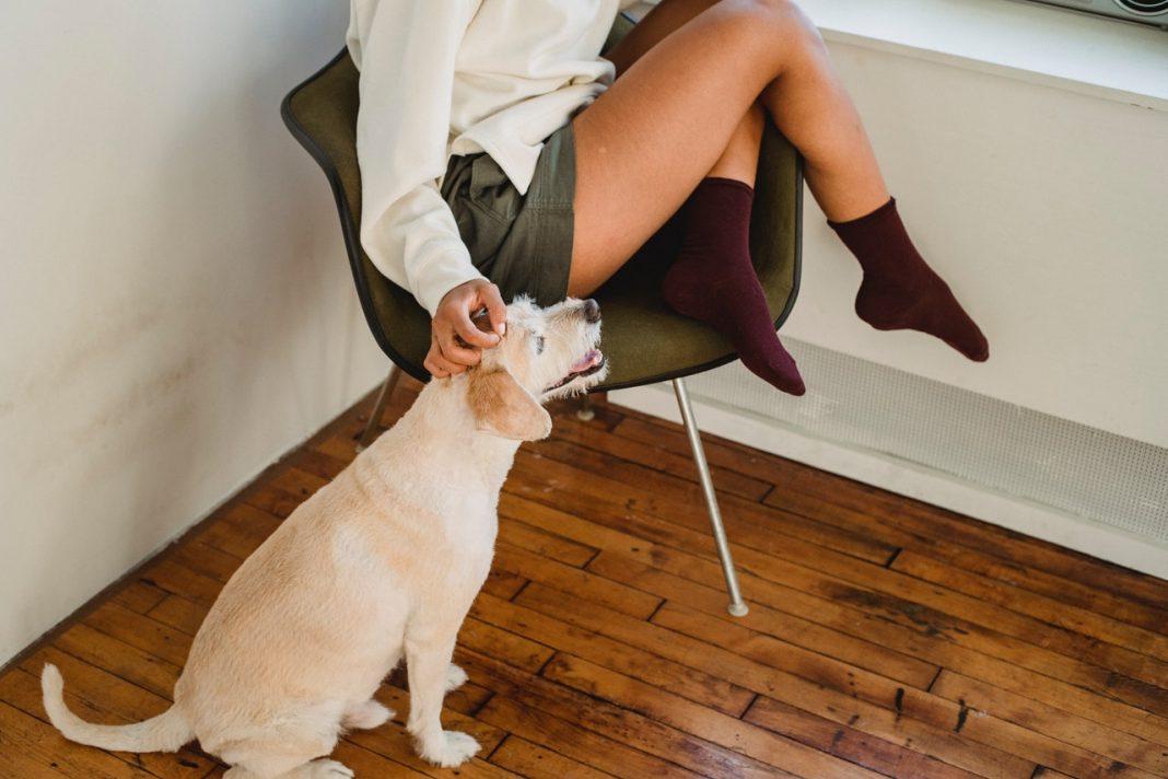 Kvinde kæler hund